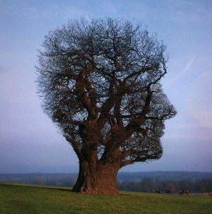 tree of half life pink floyd storm thorgerson
